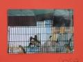 054_espongono2015_pittura.jpg
