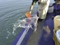 Pescatori DSCDella Livenza-09h_